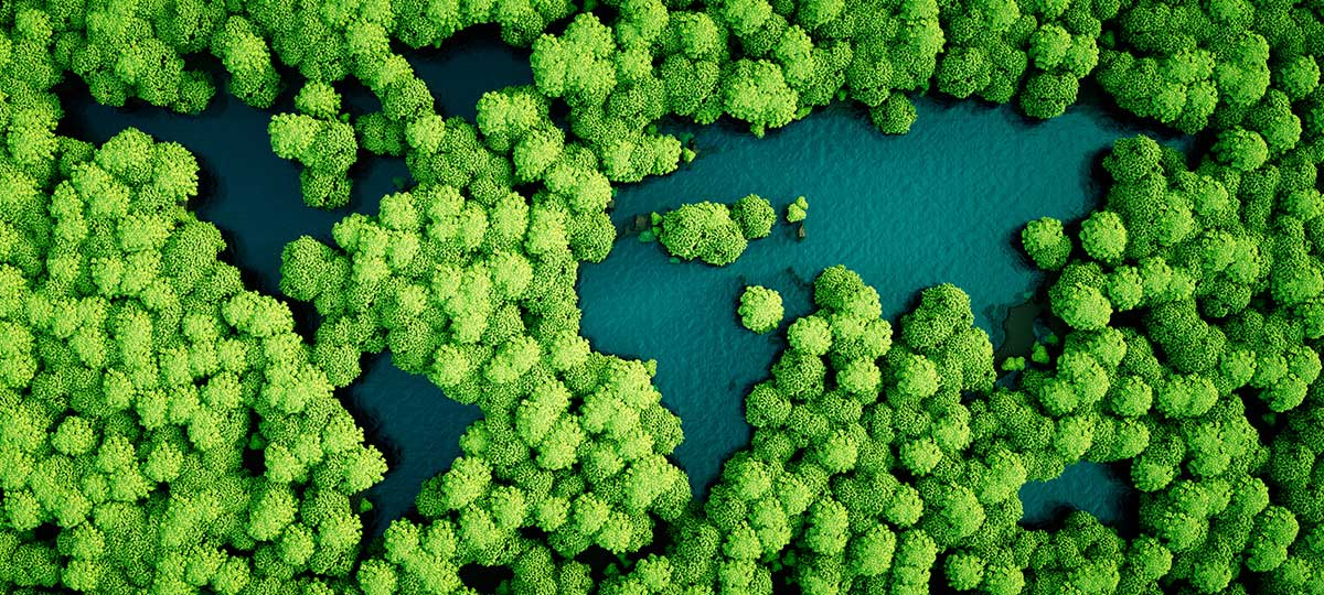 Bunch of trees in water from above
