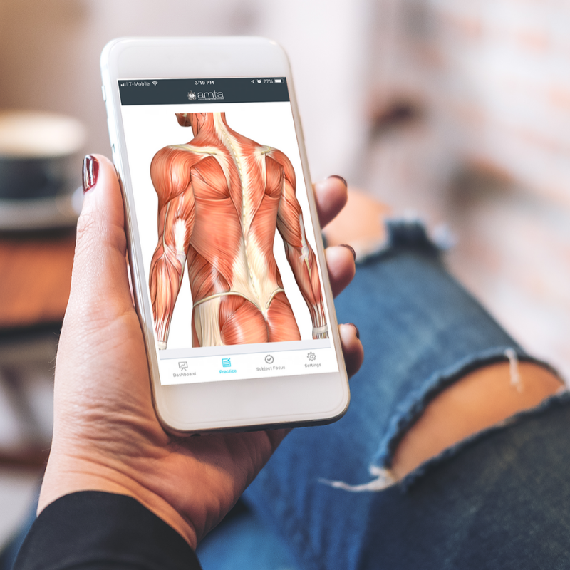 person using anatomy study app on their smartphone